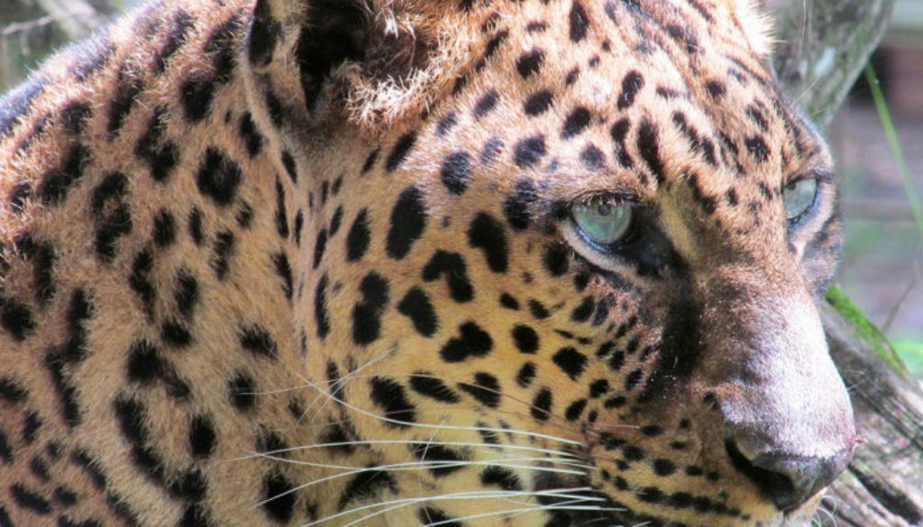 armani leopard by marylou