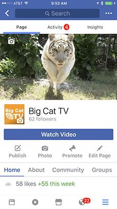 Help Free | Big Cat Rescue
