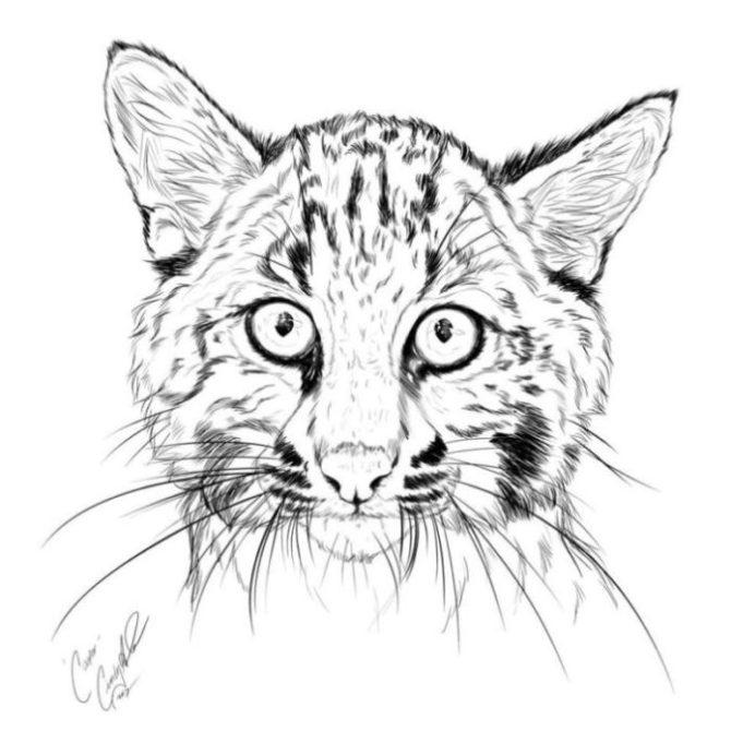 J 3 Cub Art
