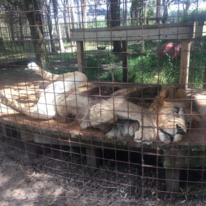 Big Cat Rescue Charity Review