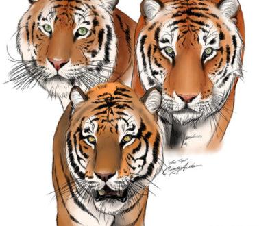 texas tigers together-WebSizeC