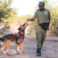Lions Working Dogs