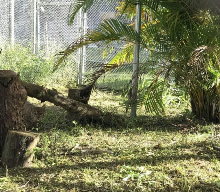 Teuci-Rehab-Bobcat