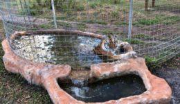 Kali Pool Restoration 5