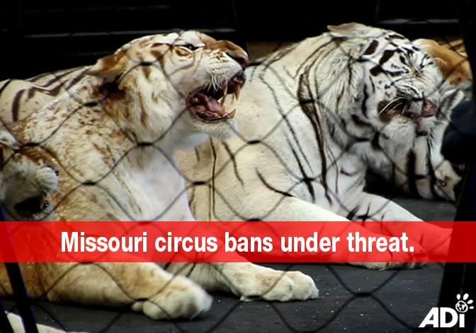 ADI Post - Missouri Circus Bans Under Threat - ACT NOW