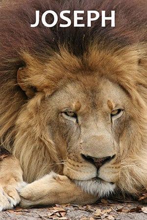 Joseph Lion