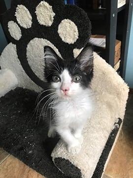 Rebecca's Foster Kitten