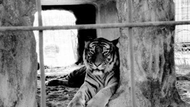 Amazon Smile | Big Cat Rescue