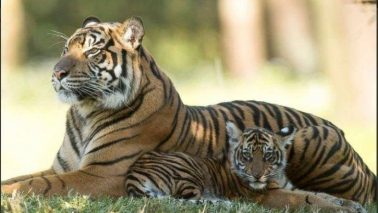 Hybrid Cat Facts, Photos, Videos, Stories