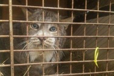 Big Cat Rescue Cams | Big Cat Rescue