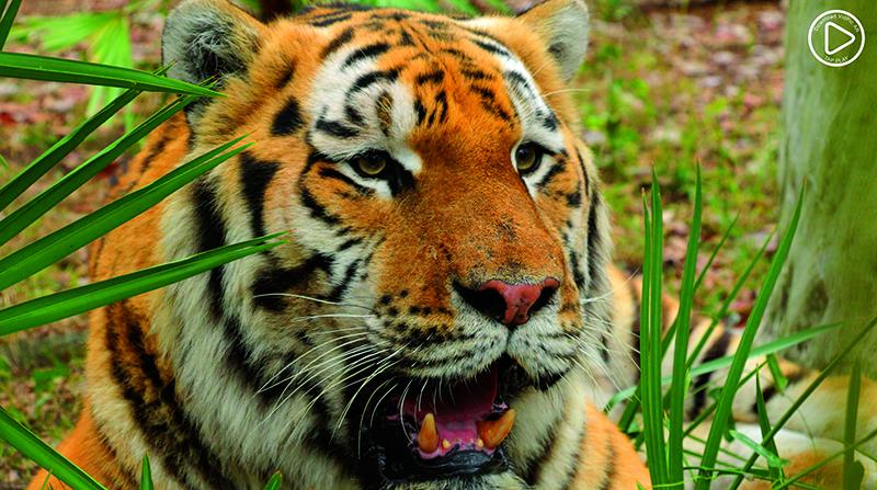 AR Zoo   Big Cat Rescue