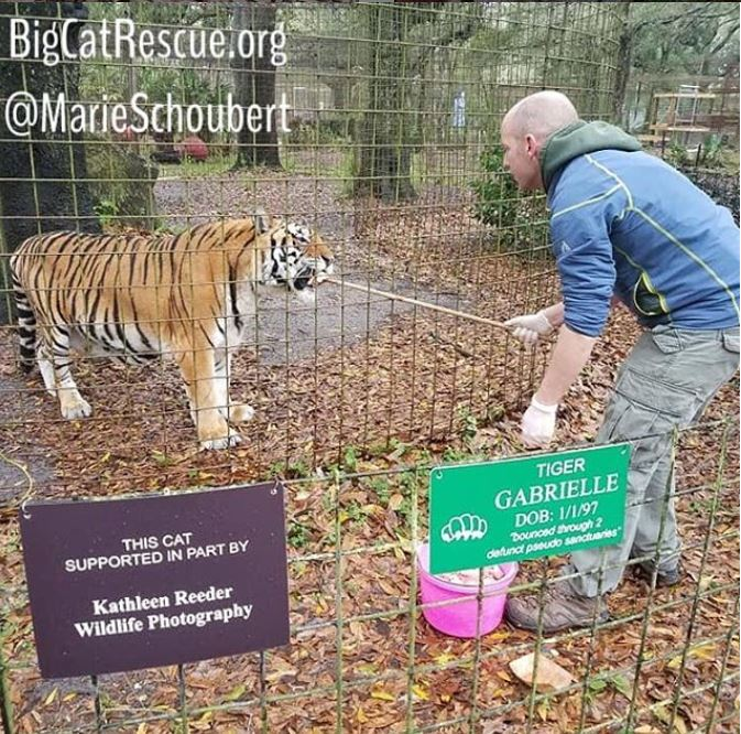 Marie loves to photograph the keepers while they work with the cats - here is Keeper Micheal feeding his favorite tiger, Gabrielle!