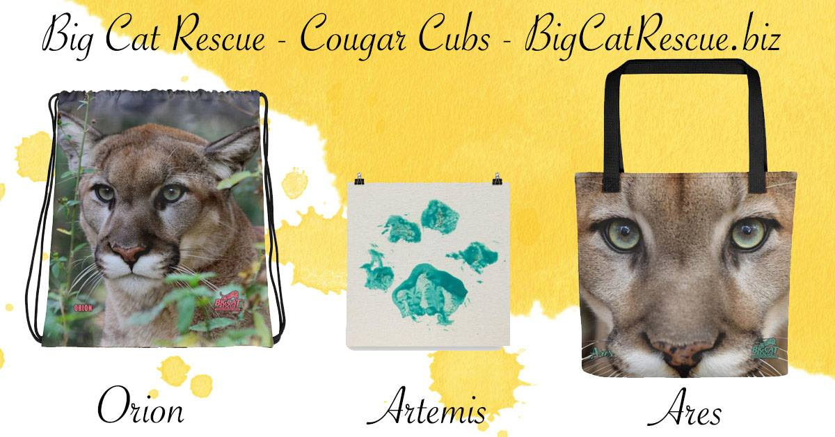 Big Cat Rescue Merchandise Ares Cougar, Artemis Cougar, and Orion Cougar