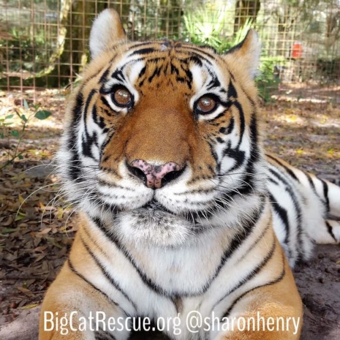 Gabrielle Tiger - Bright eyed and ready for snacks