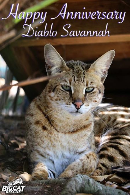 Diablo Savannah