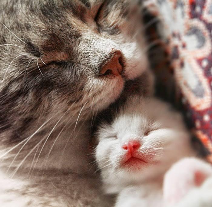Foster Kitten Program Request