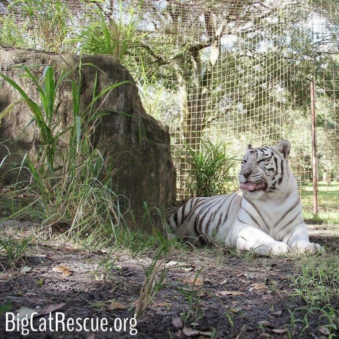 Zabu overall is doing okay after the loss of Cameron, but Keepers are still keeping a close eye on her and making sure she gets extra attention.