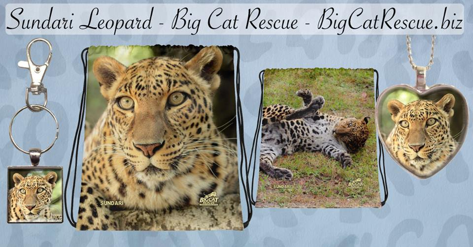 Look at the adorable Sundari merchandise available on BigCatRescue.biz
