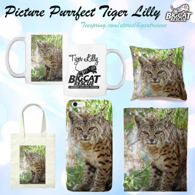 Picture Purrfect Tiger Lilly Bobcat products now available on our Teespring store! Shop Mugs, Pillows, Blankets, Towels, Totes, Canvas Prints and more!!! https://teespring.com/picture-perfect-tiger-lilly