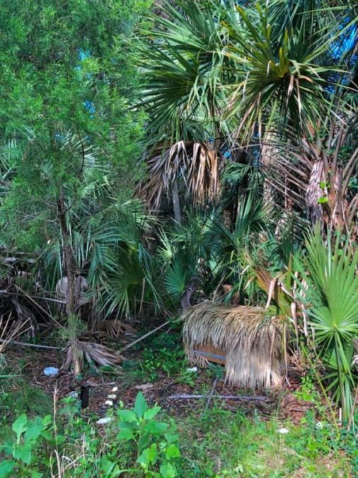 The den crate tucked into the palmettos. A free meal and water dish were left to supplement their transition to life in the wild.