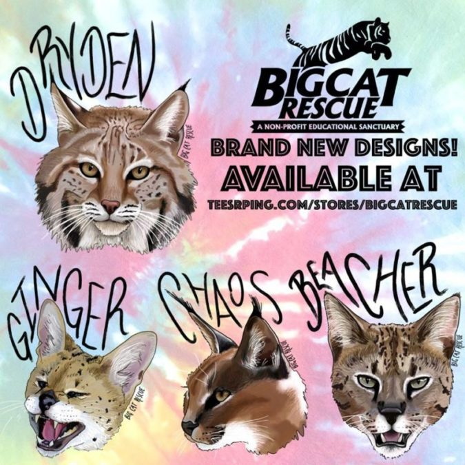 WOW! So many NEW items are now available on our Teespring Store! Thanks to Artist and BCR Supporter Natalie Powell we have new designs featuring Dryden, Ginger, Chaos, and Beacher!! Shop Apparel, Home Items, and Accessories for all of these adorable designs! https://teespring.com/handsome-dryden-bobcat https://teespring.com/hissy-hello-ginger-serval https://teespring.com/wildcat-chaos-caracal https://teespring.com/beacher-savannah-cat