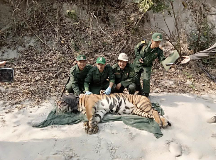 Conserving-Bhutans-Mountain-Tigers-2