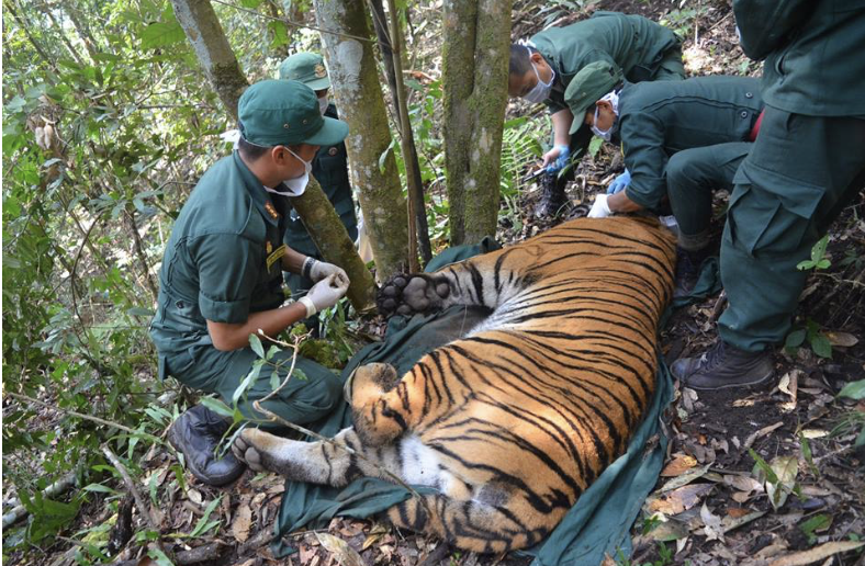 Conserving-Bhutans-Mountain-Tigers-4