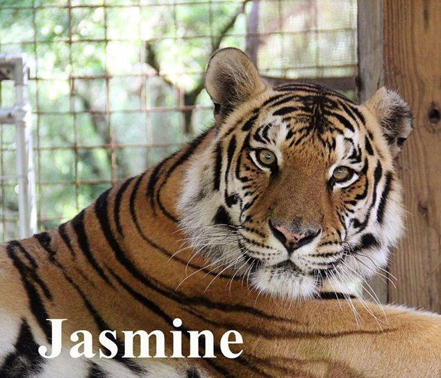 Jasmine Tigress wishing you a peaceful, blessed evening!