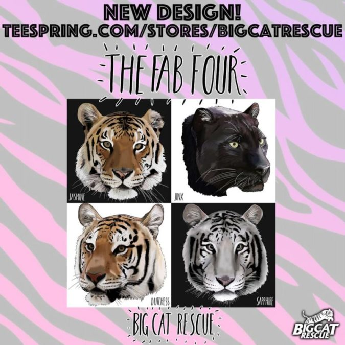 NEW Fab 4 Designs are now available on our Teespring store! Fab 4 design featuring Jasmine, Jinx, Dutchess, and Sapphire designed by BCR Supporter Natalie Powell for Big Cat Rescue. https://teespring.com/big-cat-rescue-fab-4