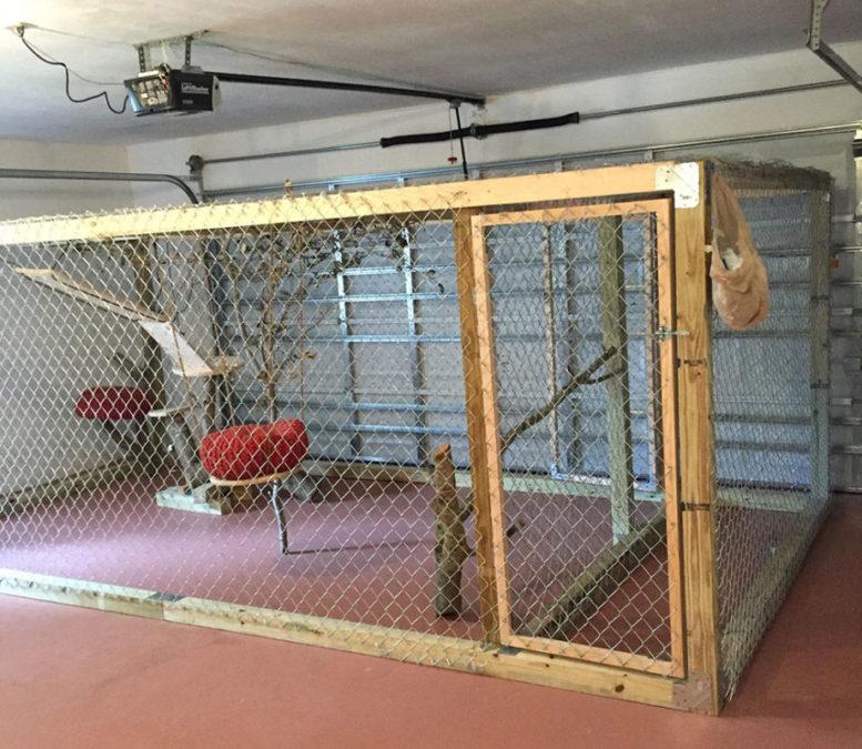Illithia-Serval-Garage-Cage-2