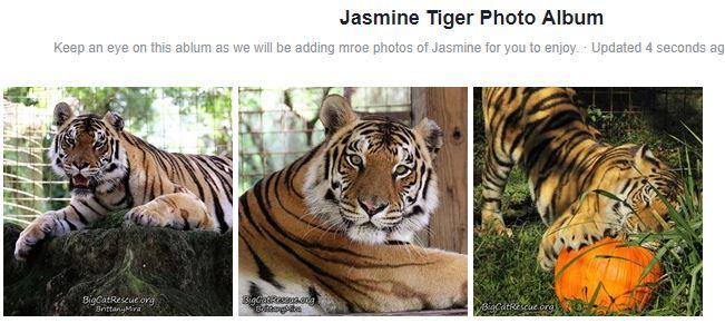 Jasmine Tiger Facebook Photo Album
