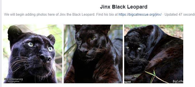 Jinx Black Leopard Photo Album