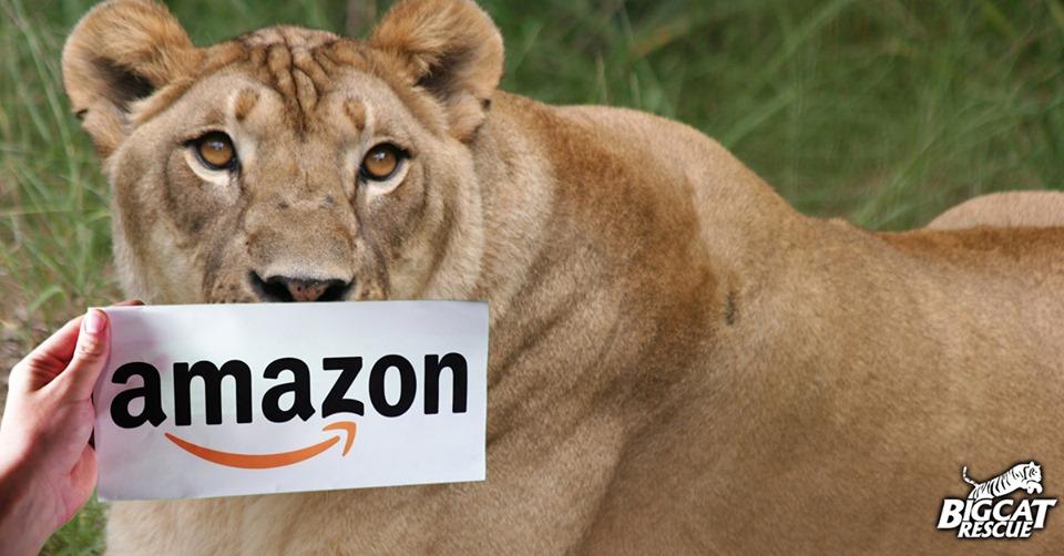 Nikita Lion Amazon Smile
