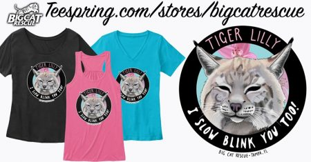 NEW Design Alert! Available now at Teespring.com/stores/bigcatrescue and Amazon.com/bigcatrescue Tiger Lilly - I Slow Blink You too! Inspired by the Morning Facebook LIVE viewers and created by BCR Supporter Natalie Powell. https://teespring.com/tiger-lilly-slow-blink
