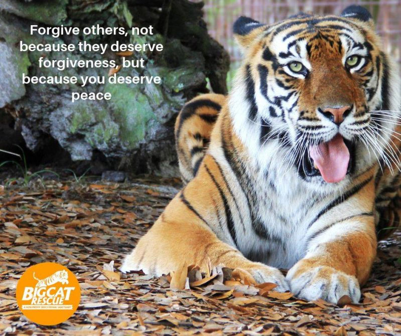 Meme & Quote of the Day - Forgive others, not because they deserve forgiveness, but because you deserve peace.