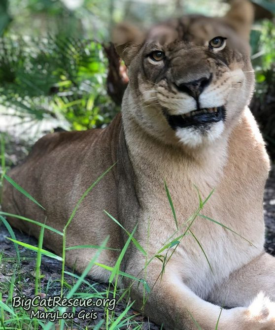 Nikita Lioness is happy happy happy it is finally FURiday!