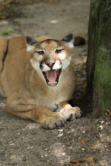 Jamie Veronica - Ares Cougar is such a jokester ;-)