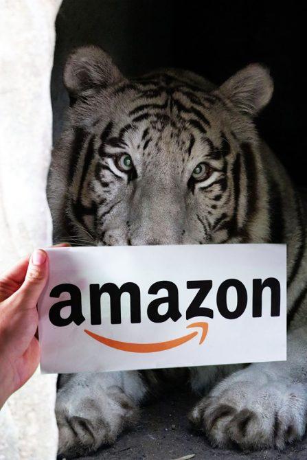 Sapphire Amazon Smile