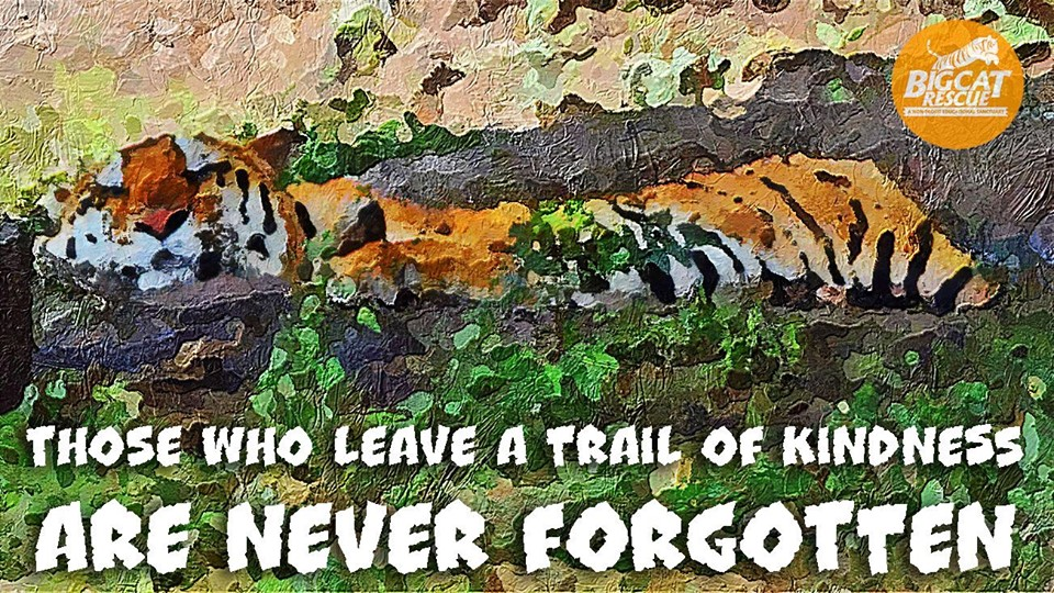 "Memes and Quotes - ""Those who leave a trail of kindness are never forgotten"""