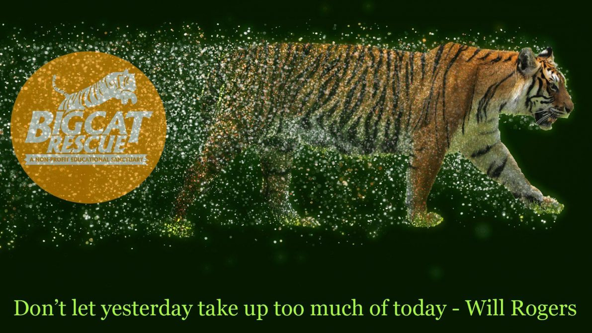 "Memes and Quotes ""Don't let yesterday take up too much of today!""- Will Rogers"