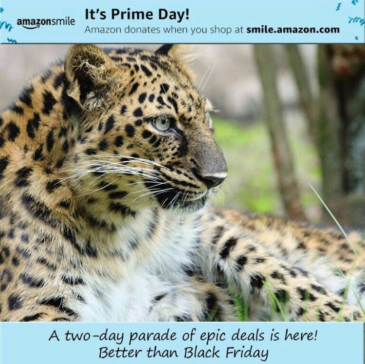 Natalia the Amur Leopard wants to remind you before she takes her evening catnap that today is Amazon Prime Day