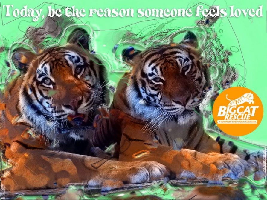 """Memes and Quotes - """"Today, be the reason someone feels loved"""""""