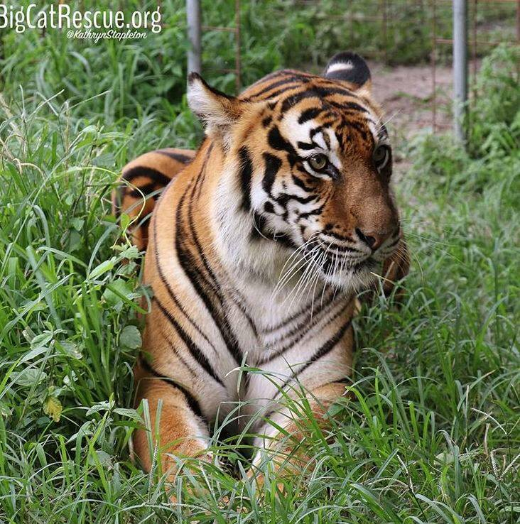Amanda Tigress is bright eyed and bushy tailed this morning!