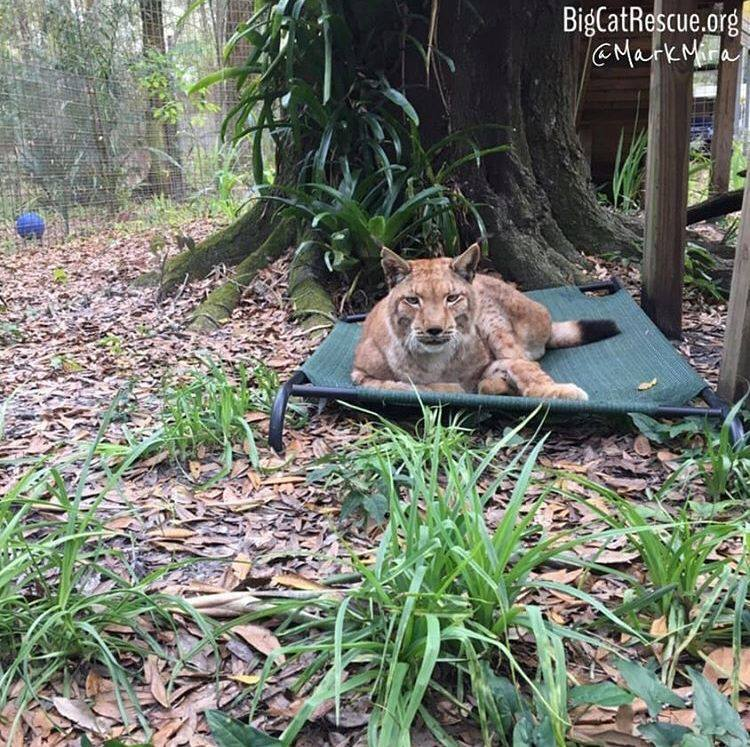 Apollo LOVES his Coolaroo bed and giving a little puff to keepers that pass by!