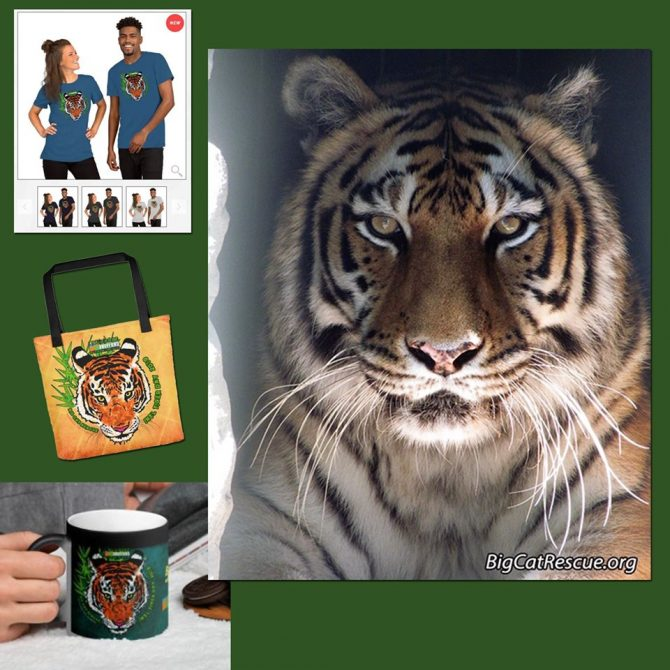 Miss Keisha Tigress wishes you a peaceful evening! ? Purr-chase International Tiger Day merchandise to support BCR's efforts to save the tigers in the wild! https://big-cat-rescue.myshopify.com/collections/international-tiger-day-1