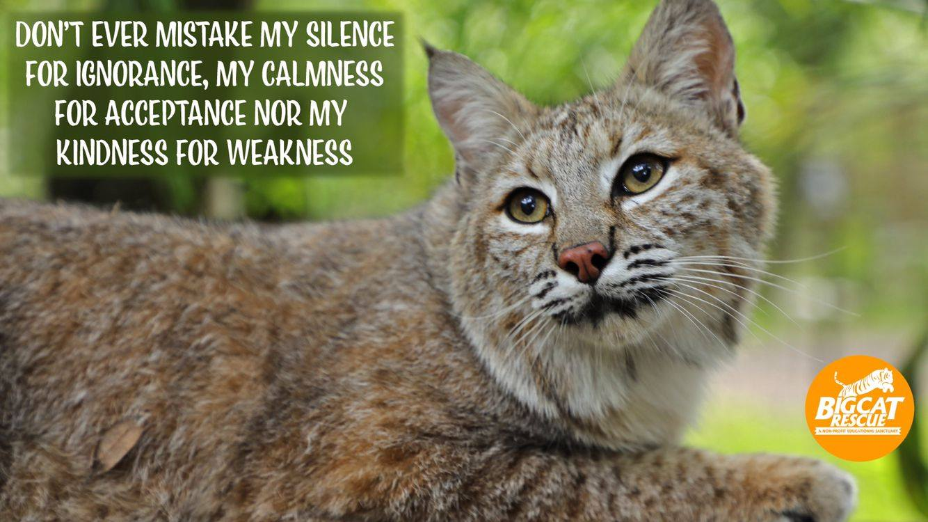 Memes and Quotes - Don't ever mistake my silence for ignorance, my calmness for acceptance nor my kindness for weakness.