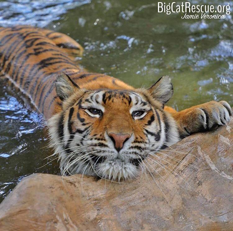 OOO MMM SQUEEEE! Look at Priya enjoying her pool!