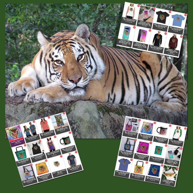 Beautiful Miss Dutchess Tigress wishes you a quiet, star filled night! 🌟✨🌟 You can still order International Tiger Day merchandise to support the conservation effort of wild tigers! https://big-cat-rescue.myshopify.com/collections/international-tiger-day-1