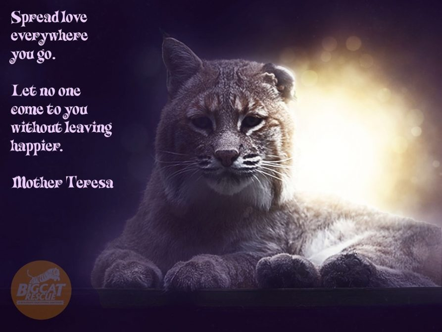 """Memes and Quotes - """"Spread love everywhere you go. Let no one come to you without leaving happier. """" ~Mother Teresa"""