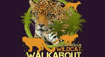 Our Cat Bios|Big Cat Rescue